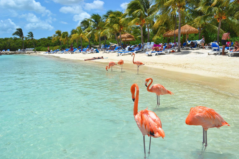 Солнечная Доминикана на Новый год - Туристический оператор APL Travel (АПЛ Тревел)
