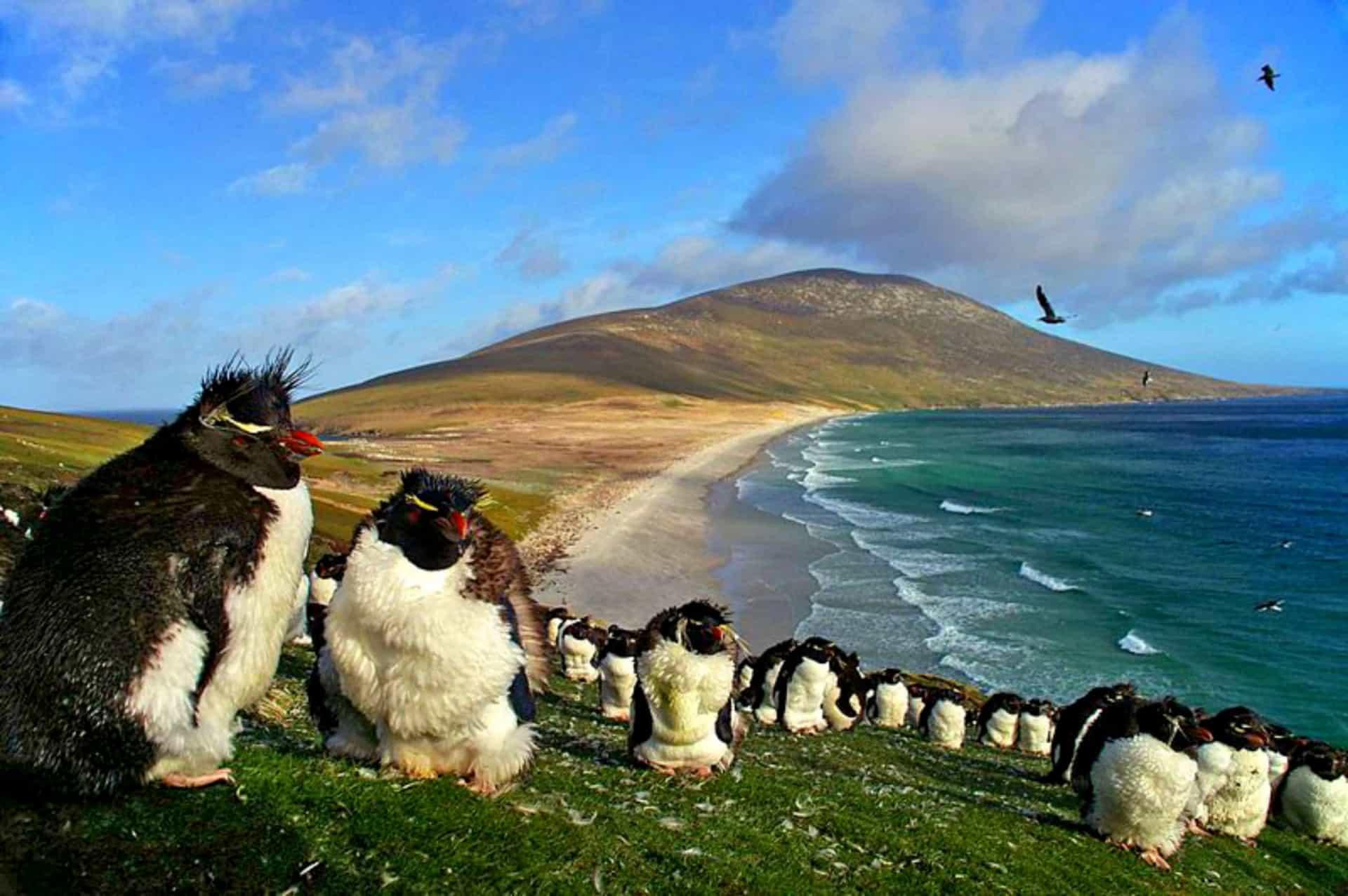 Тур с круизом на Celebrity Silhouette 5*: из Аргентины в Антарктиду - Туристический оператор APL Travel (АПЛ Тревел)